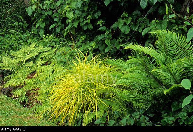 Perennials, Ferns & Grasses