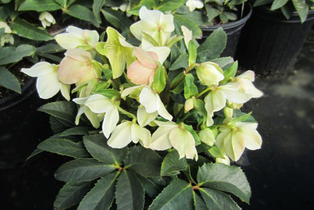 April Featured Plant